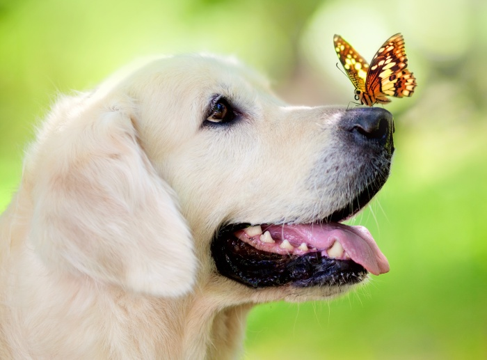 dog_muzzle_butterfly_tongue_sticking_out_spring_summer_93617_3744x2770